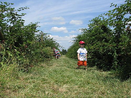 Among the brambly hedge