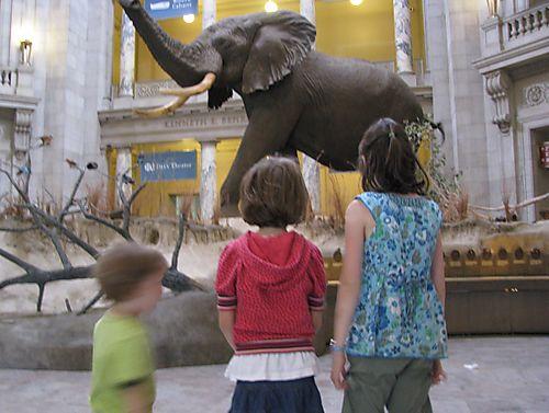 Elephant hall