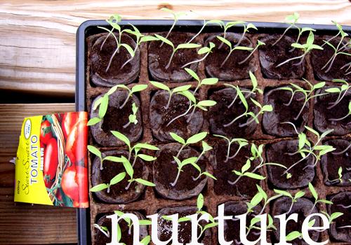 Nurture-sprouts