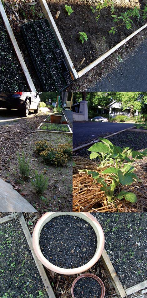 Urban-garden-may-21