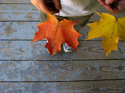 Porch leaves 1