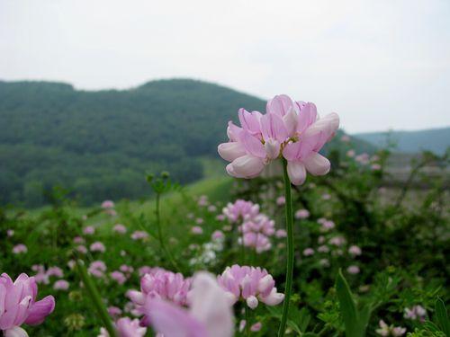 Kinzua wildflowers