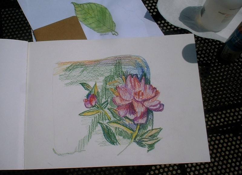 Watercolor_pencil_peony3
