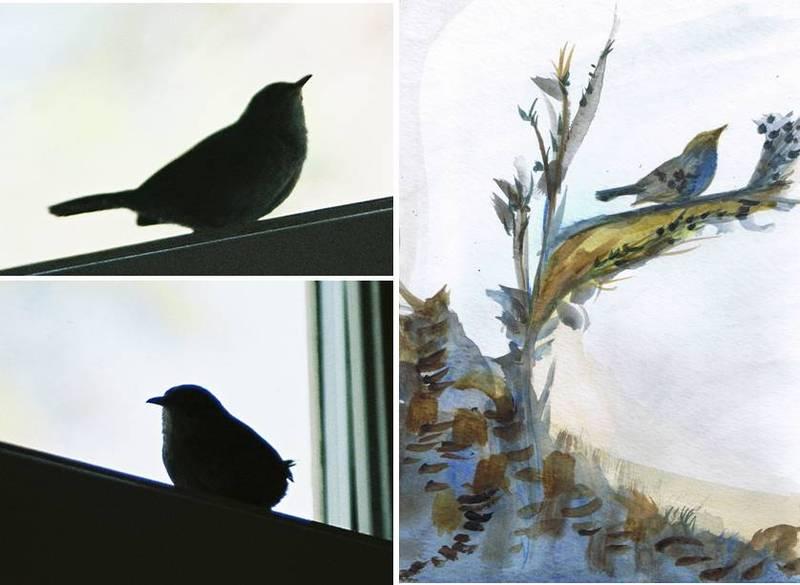 Bird_images